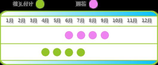 ヒメイワダレソウの育て方時期の表