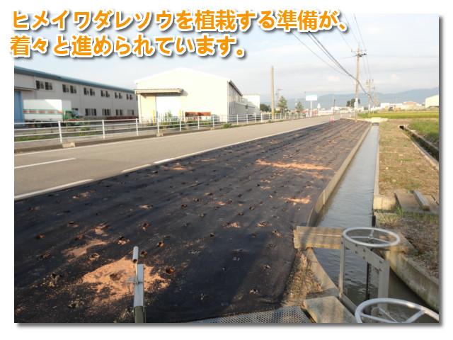 会社近く字田子島道路の路肩ヒメイワダレソウ植栽の準備01